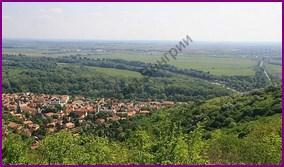 Цеховая организация в городах Венгерского королевства